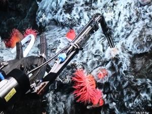 Water sampling at the Jan Mayen vents